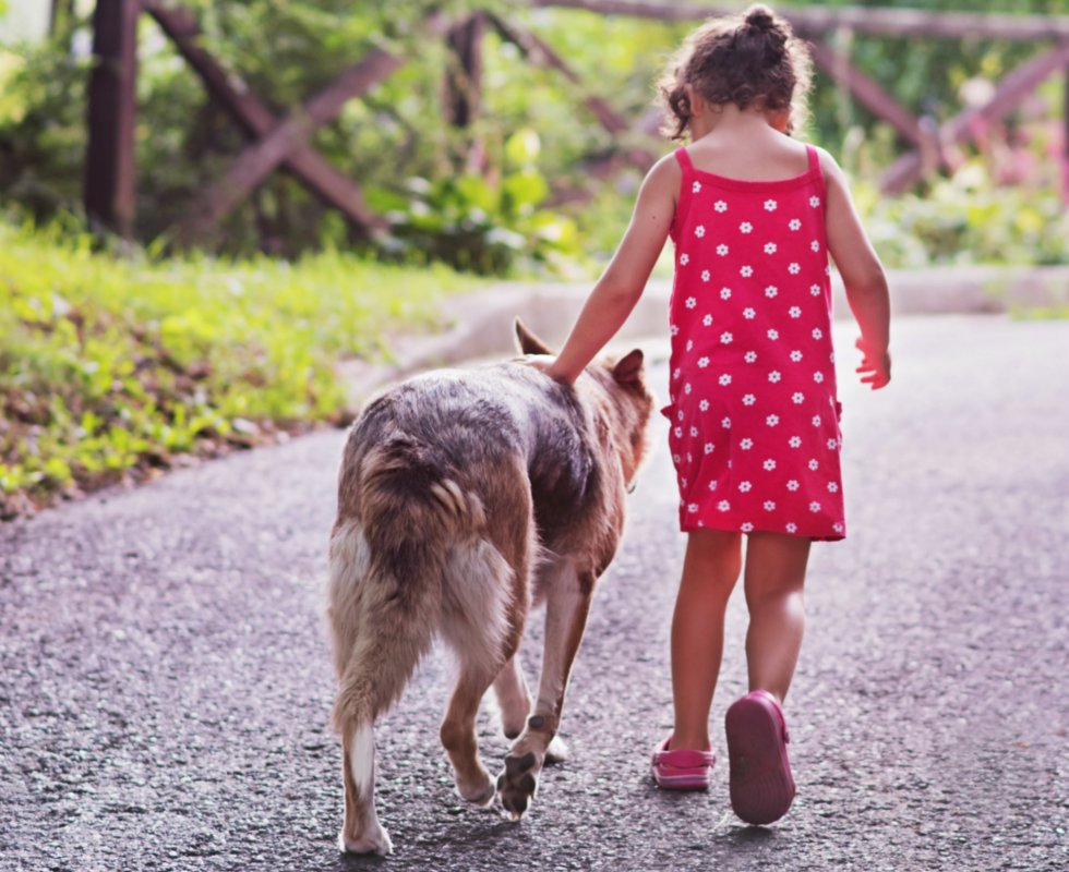 Little girl walking with hand on a dog