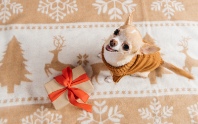 Holiday Safety Tips for Dog Owners