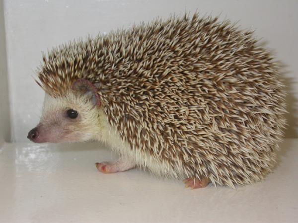 Mouth tumor hedgehog GANT61 Reduces