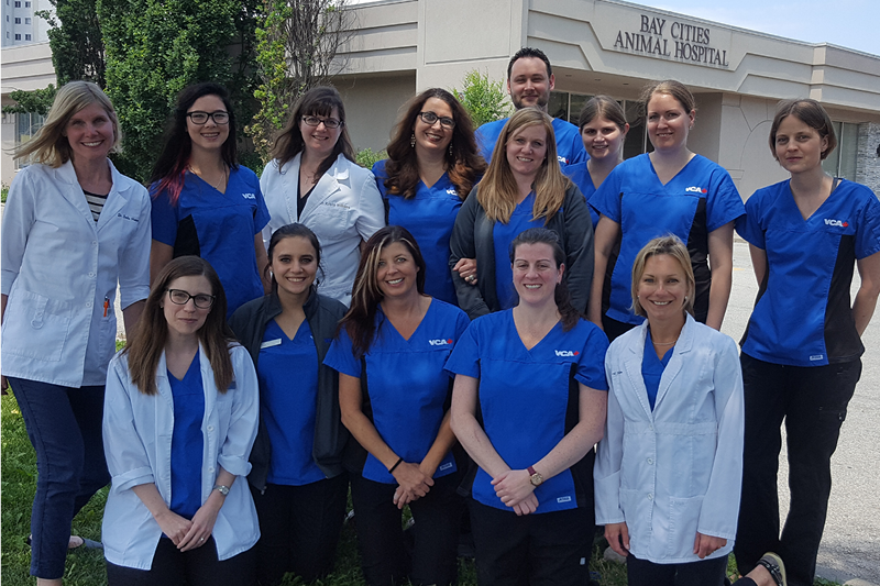 Our Baycities Animal Hospital Team