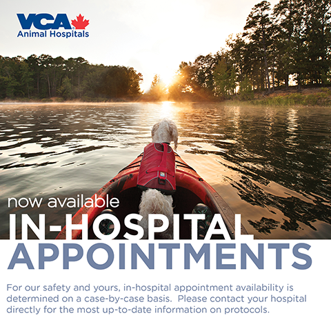 In hospital appointments available
