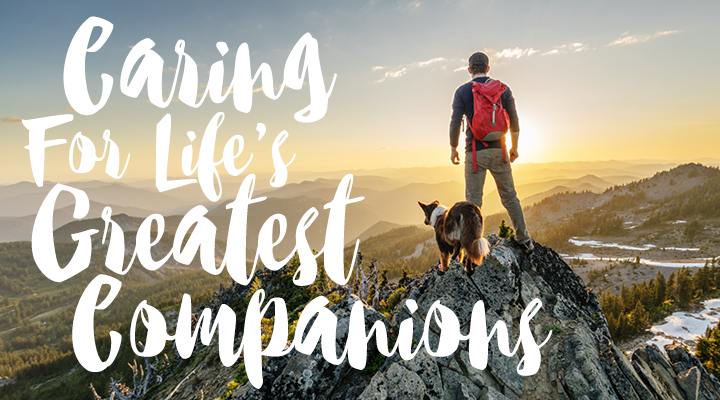 Caring For Life's Greatest Companions